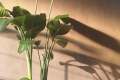 Kalkverf, in groen bronzen kleur verticaal aangebracht met de kwast
